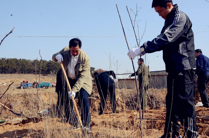 区领导参加植树活动